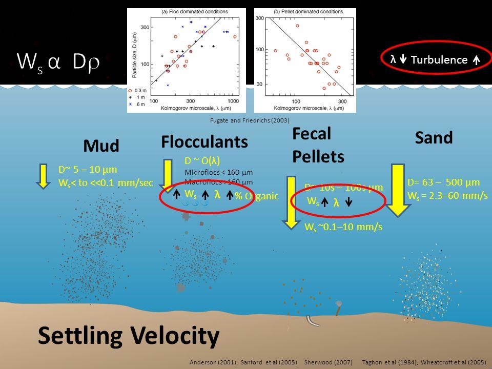 Mud Flocculants Fecal Pellets Sand D~ 5 – 10 µm W s < to <<0.1 mm/sec D ~ O(λ) Microflocs < 160 µm Macroflocs >160 µm W s D~ 10s – 100s µm W s W s ~0.1–10 mm/s D= 63 – 500 µm W s = 2.3–60 mm/s λ Turbulence λ λ % Organic Settling Velocity Fugate and Friedrichs (2003) Sherwood (2007)Anderson (2001), Sanford et al (2005)Taghon et al (1984), Wheatcroft et al (2005)