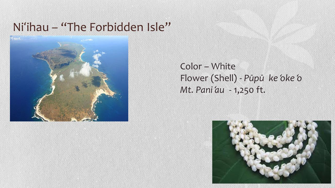 Ni ʻ ihau – The Forbidden Isle Color – White Flower (Shell) - Pūpū ke ʻ oke ʻ o Mt.
