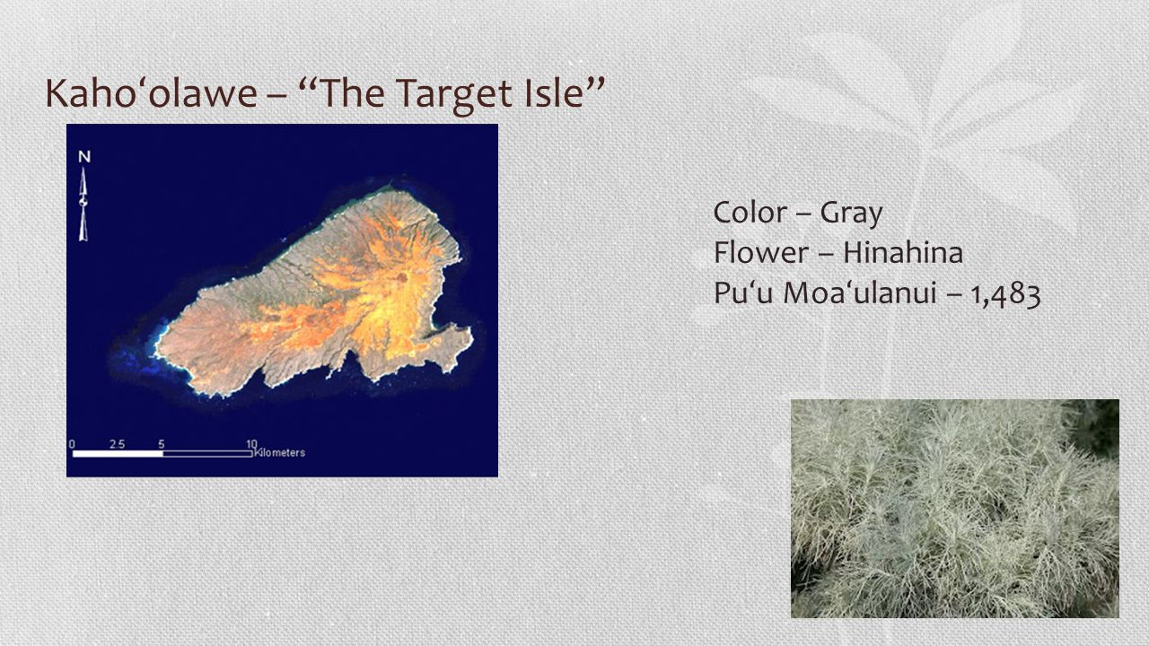 Kaho ʻ olawe – The Target Isle Color – Gray Flower – Hinahina Pu ʻ u Moa ʻ ulanui – 1,483