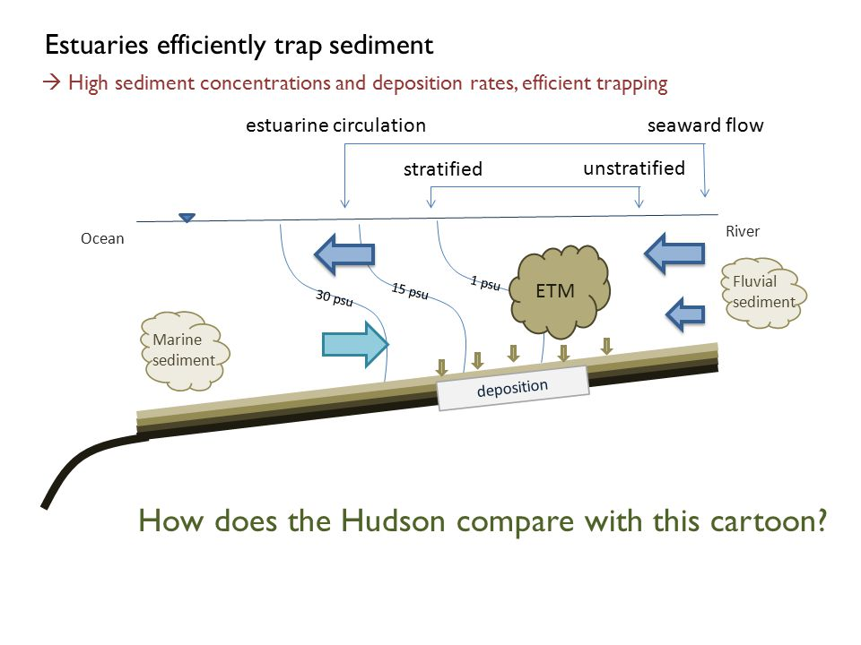 ETM River Ocean Marine sediment Fluvial sediment deposition Estuaries efficiently trap sediment 30 psu 15 psu 1 psu  High sediment concentrations and deposition rates, efficient trapping How does the Hudson compare with this cartoon.