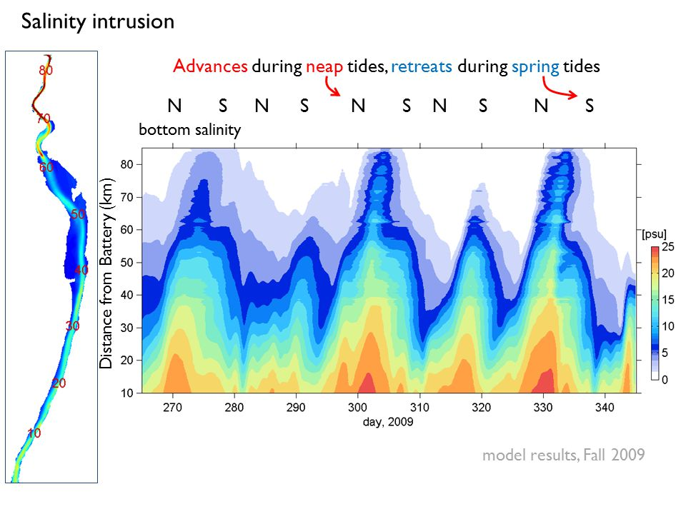 Salinity intrusion bottom salinity N S N S N S N S N S Advances during neap tides, retreats during spring tides Distance from Battery (km) model resul