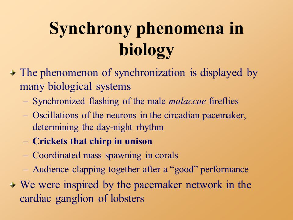 Synchrony phenomena in biology The phenomenon of synchronization is displayed by many biological systems –Synchronized flashing of the male malaccae fireflies –Oscillations of the neurons in the circadian pacemaker, determining the day-night rhythm –Crickets that chirp in unison –Coordinated mass spawning in corals –Audience clapping together after a good performance We were inspired by the pacemaker network in the cardiac ganglion of lobsters