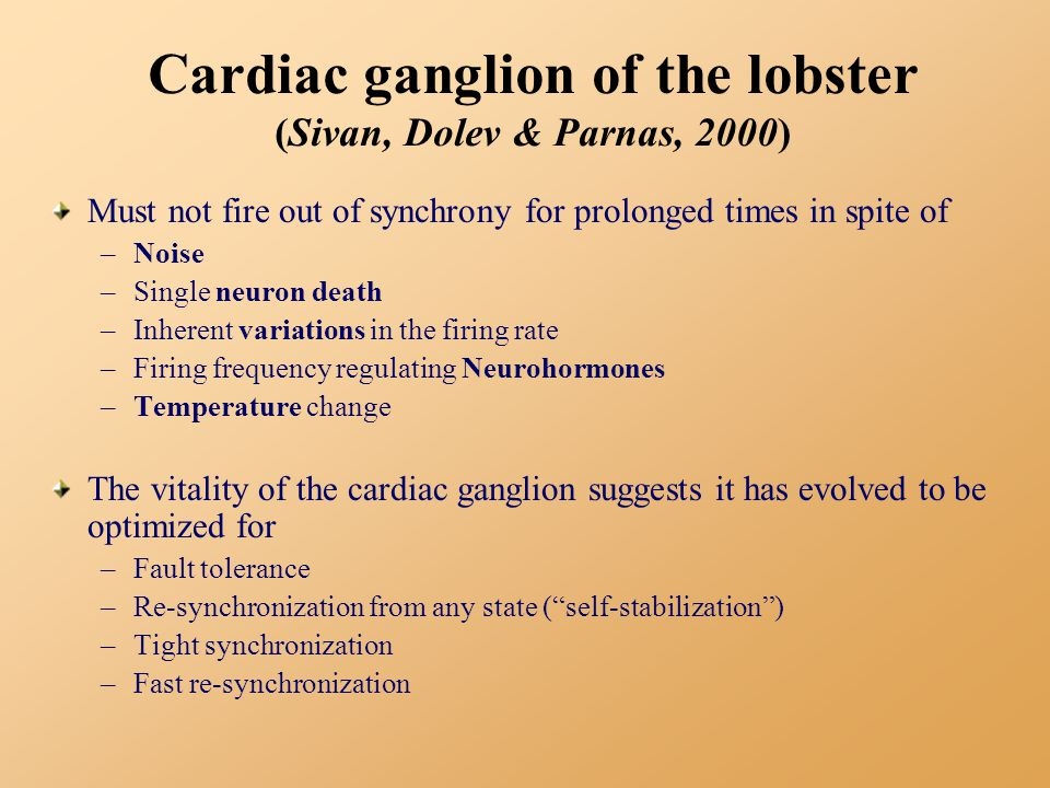 Cardiac ganglion of the lobster (Sivan, Dolev & Parnas, 2000) Must not fire out of synchrony for prolonged times in spite of –Noise –Single neuron death –Inherent variations in the firing rate –Firing frequency regulating Neurohormones –Temperature change The vitality of the cardiac ganglion suggests it has evolved to be optimized for –Fault tolerance –Re-synchronization from any state ( self-stabilization ) –Tight synchronization –Fast re-synchronization