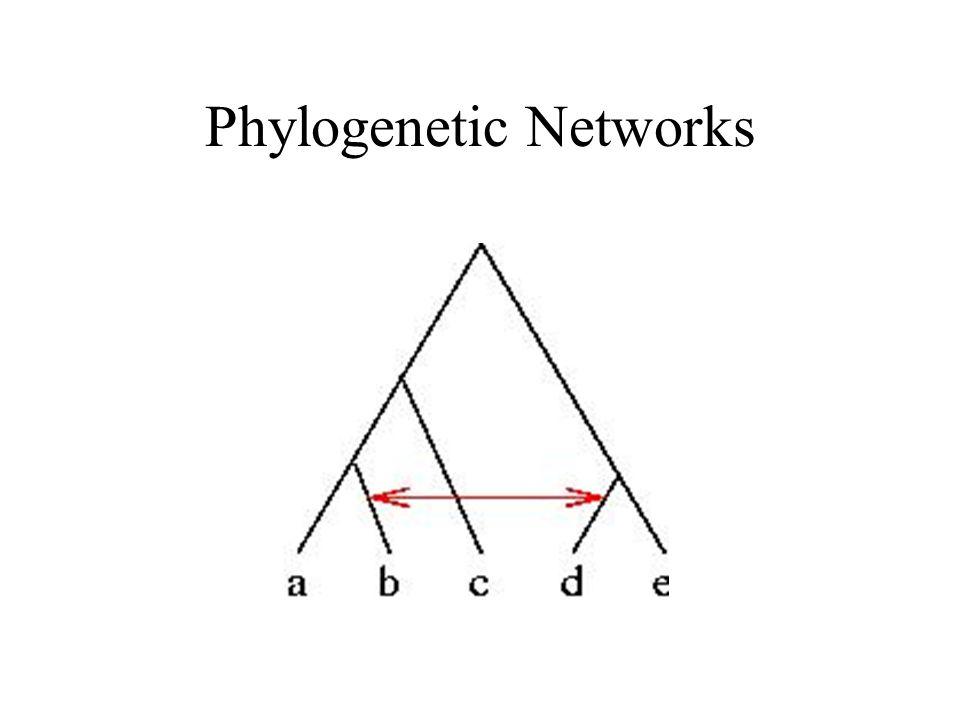 Phylogenetic Networks