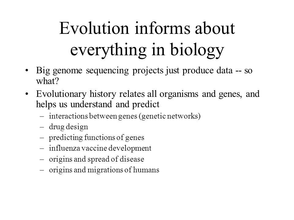 Phylogenetic Network of the IE Dataset