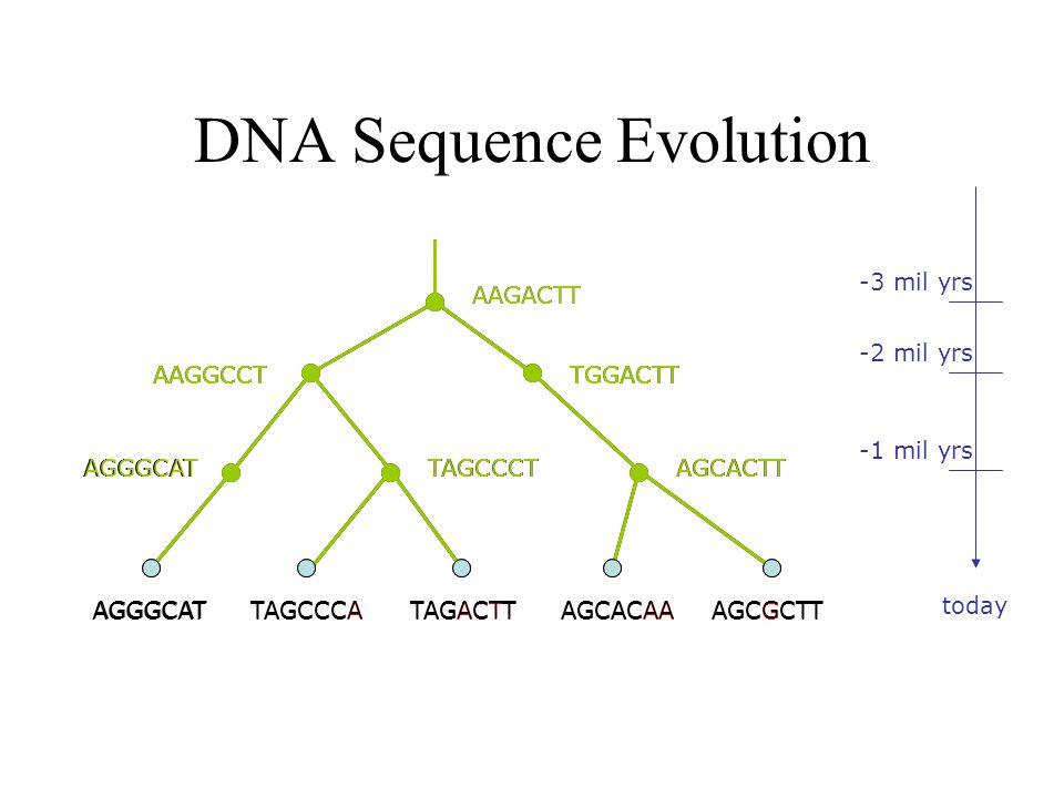 Molecular Systematics TAGCCCATAGACTTTGCACAATGCGCTTAGGGCAT UVWXY U VW X Y