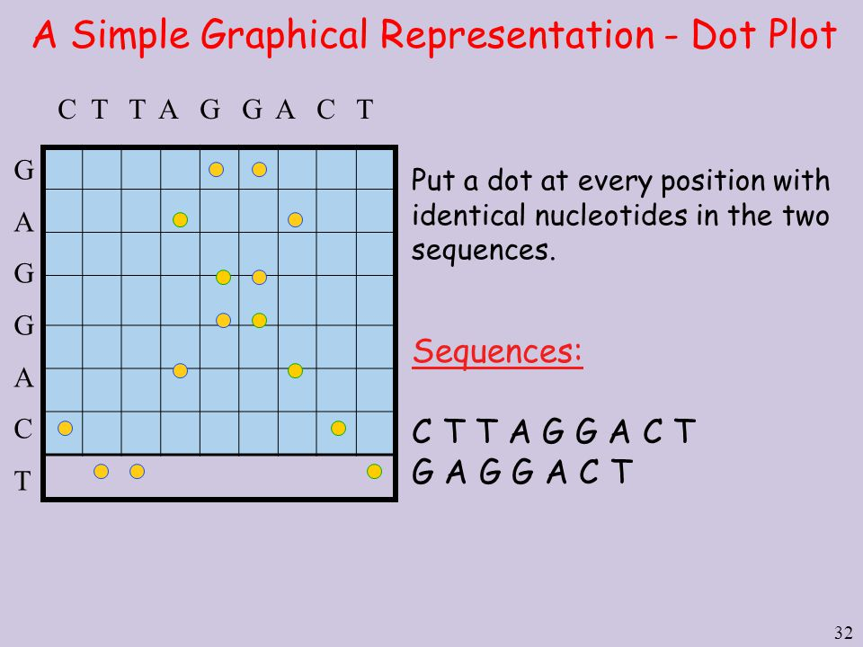 32 A Simple Graphical Representation - Dot Plot Put a dot at every position with identical nucleotides in the two sequences. C T T A G G A C T GAGGACT