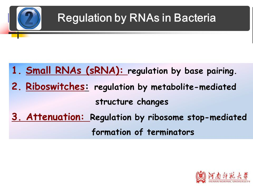 1.Small RNAs (sRNA): regulation by base pairing. 2.Riboswitches: regulation by metabolite-mediated structure changes 3. Attenuation: Regulation by rib