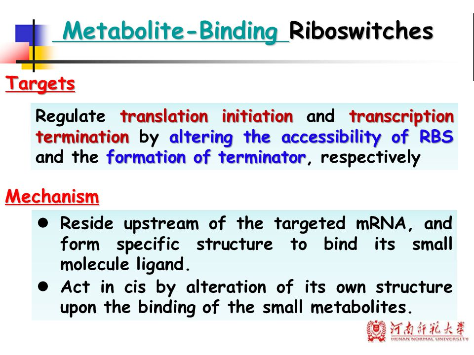 translation initiation transcription terminationaltering the accessibility of RBS formation of terminator Regulate translation initiation and transcri