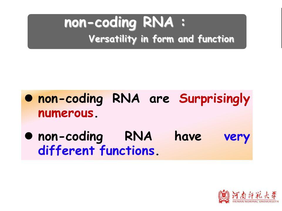 non-coding RNA are Surprisingly numerous. non-coding RNA have very different functions. non-coding RNA : non-coding RNA : Versatility in form and func
