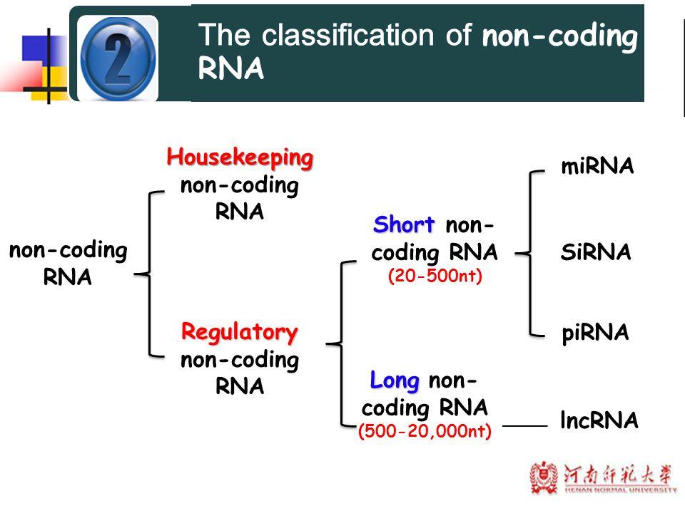 Housekeeping Housekeeping non-coding RNA non-coding RNA Regulatory Short Short non- coding RNA (20-500nt) Long Long non- coding RNA (500-20,000nt) SiR