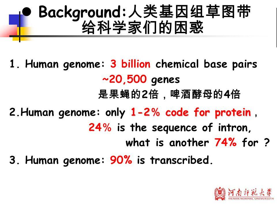 1. Human genome: 3 billion chemical base pairs ~20,500 genes 是果蝇的 2 倍,啤酒酵母的 4 倍 1-2 % code for protein 2.Human genome: only 1-2 % code for protein , 2
