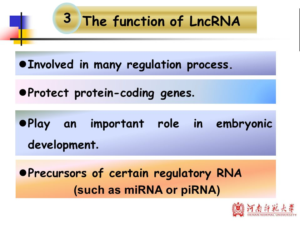 The function of LncRNA Precursors of certain regulatory RNA (such as miRNA or piRNA) Involved in many regulation process. Protect protein-coding genes