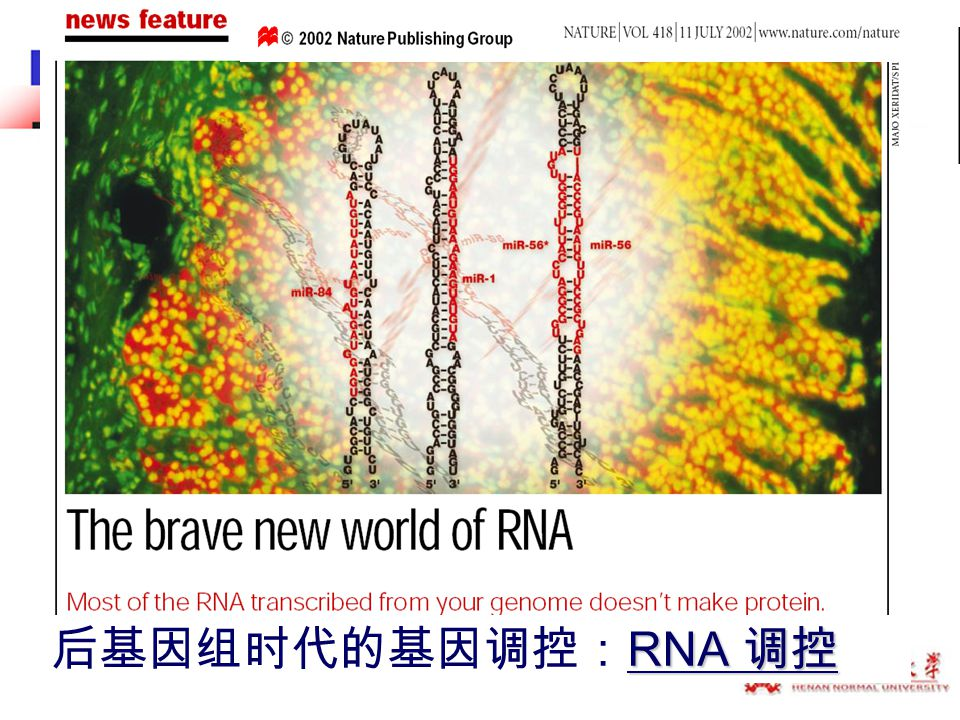Housekeeping Housekeeping non-coding RNA non-coding RNA Regulatory Short Short non- coding RNA (20-500nt) Long Long non- coding RNA (500-20,000nt) SiRNA miRNA piRNA lncRNA The classification of non-coding RNA