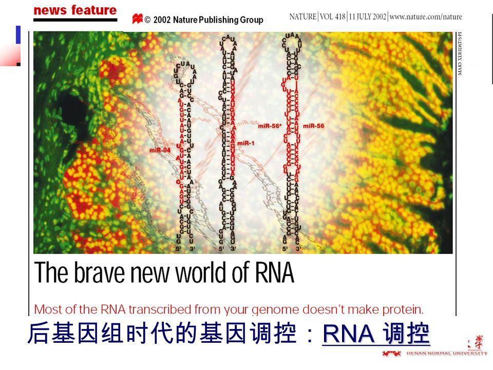 RNA 调控 后基因组时代的基因调控: RNA 调控