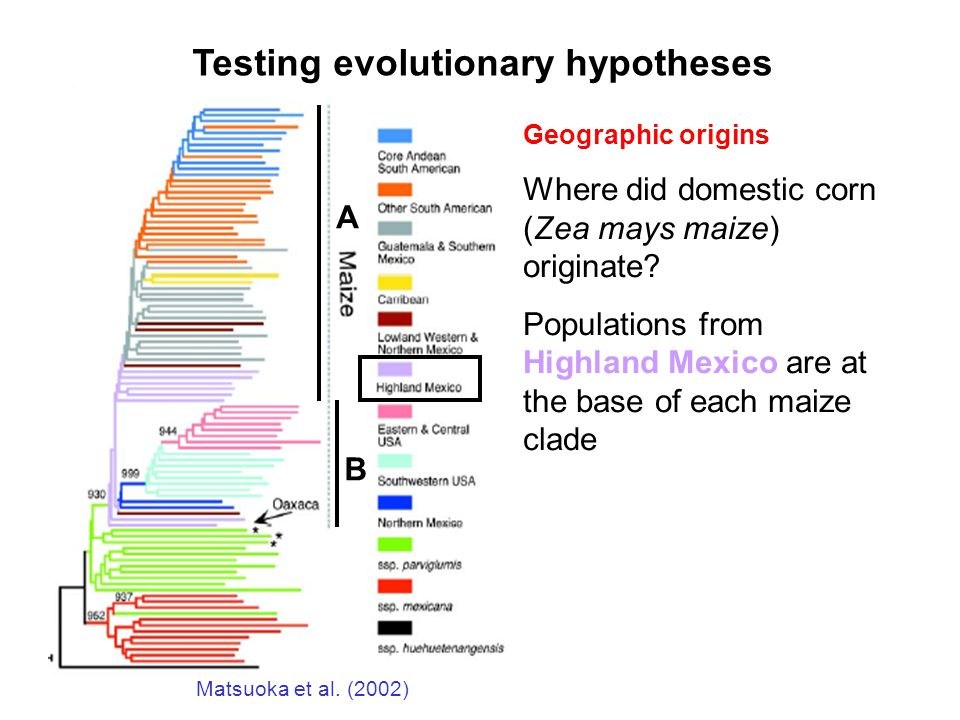 Matsuoka et al. (2002) A B Testing evolutionary hypotheses Geographic origins Where did domestic corn (Zea mays maize) originate? Populations from Hig