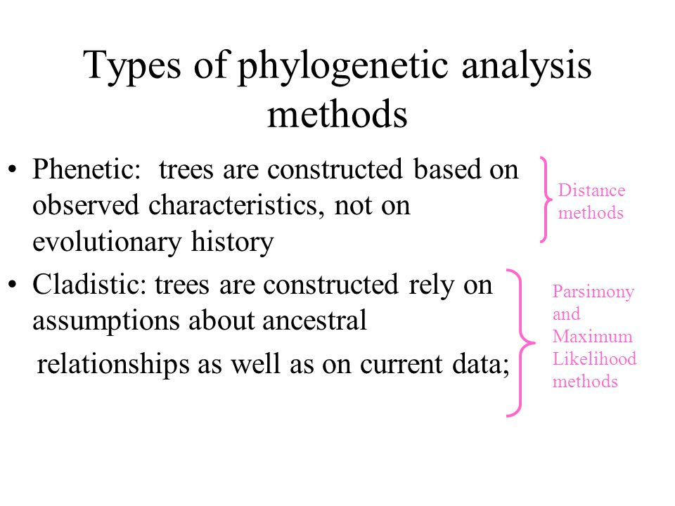 Types of phylogenetic analysis methods Phenetic: trees are constructed based on observed characteristics, not on evolutionary history Cladistic: trees