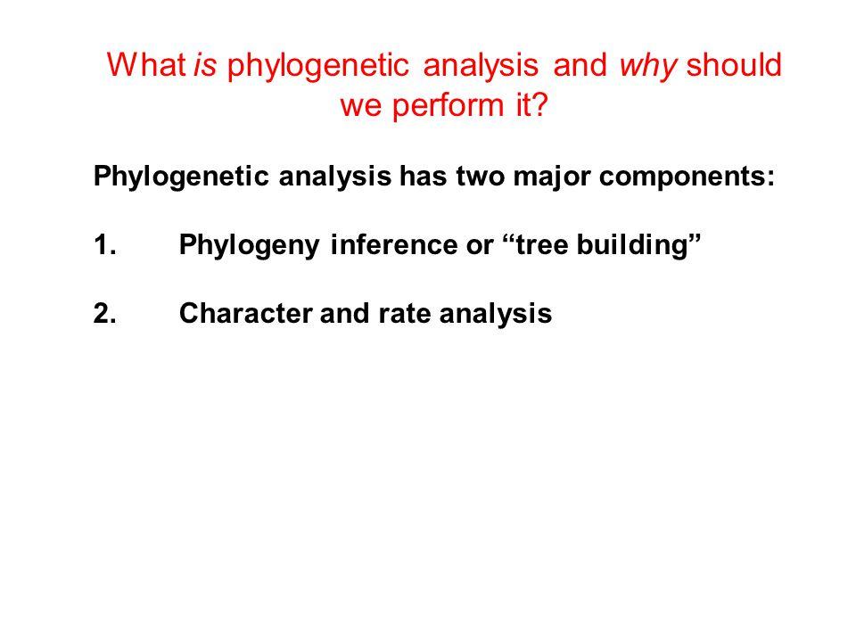 Tree-Building Methods Distance NJ Character Maximum Parsimony