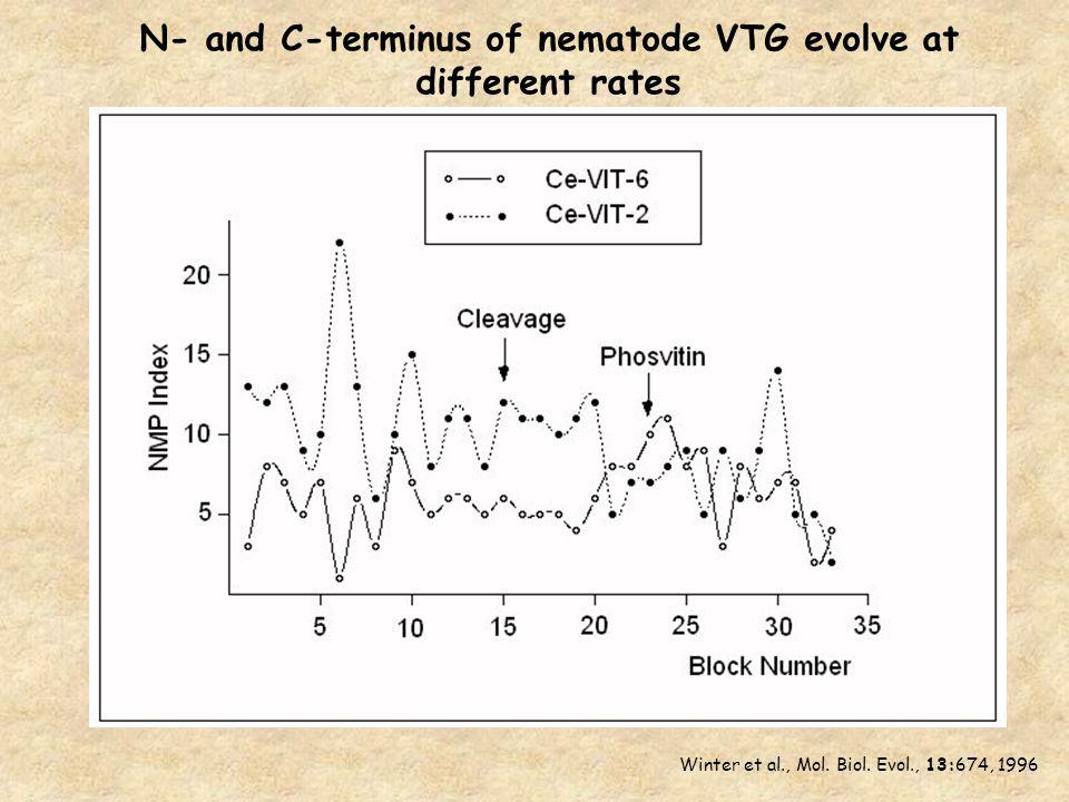 N- and C-terminus of nematode VTG evolve at different rates Winter et al., Mol.