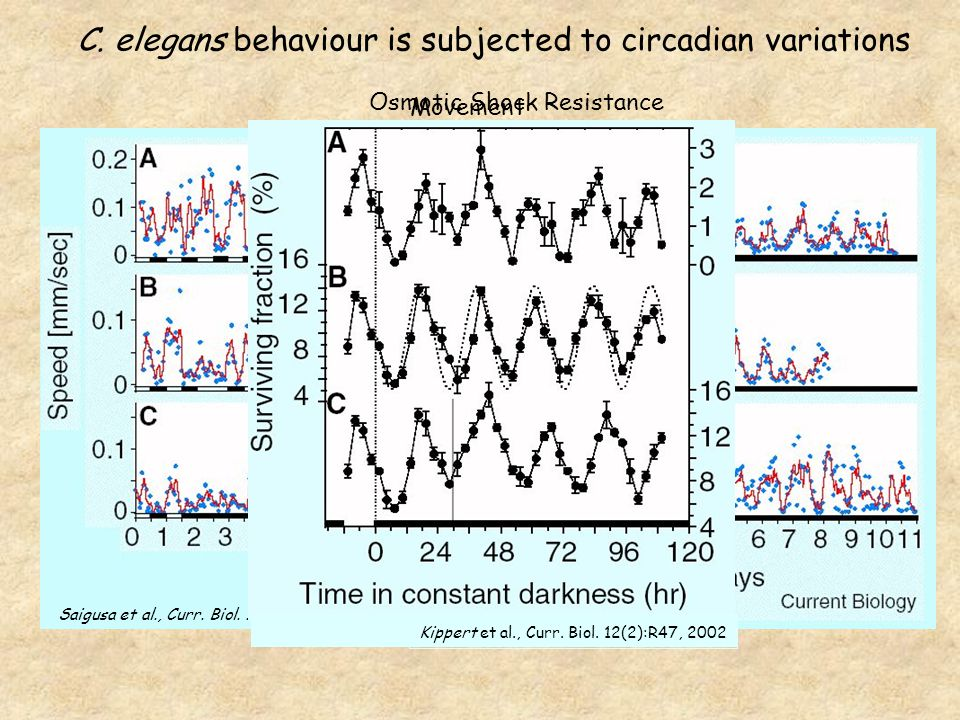 Saigusa et al., Curr. Biol. 12(2):R46, 2002 Movement Kippert et al., Curr.