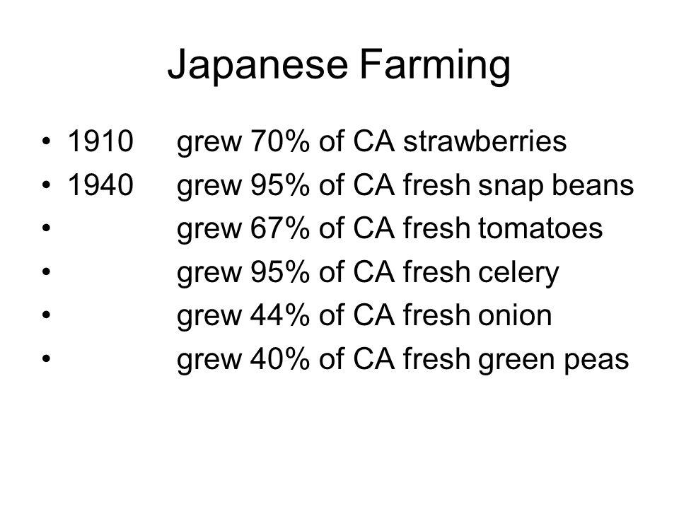 Japanese Farming 1910grew 70% of CA strawberries 1940grew 95% of CA fresh snap beans grew 67% of CA fresh tomatoes grew 95% of CA fresh celery grew 44