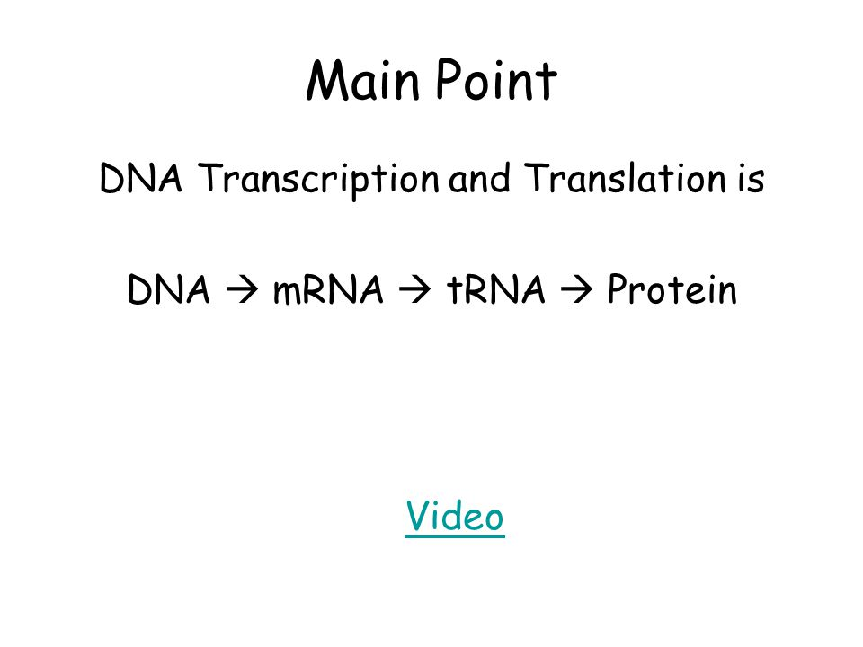 Main Point DNA Transcription and Translation is DNA  mRNA  tRNA  Protein Video