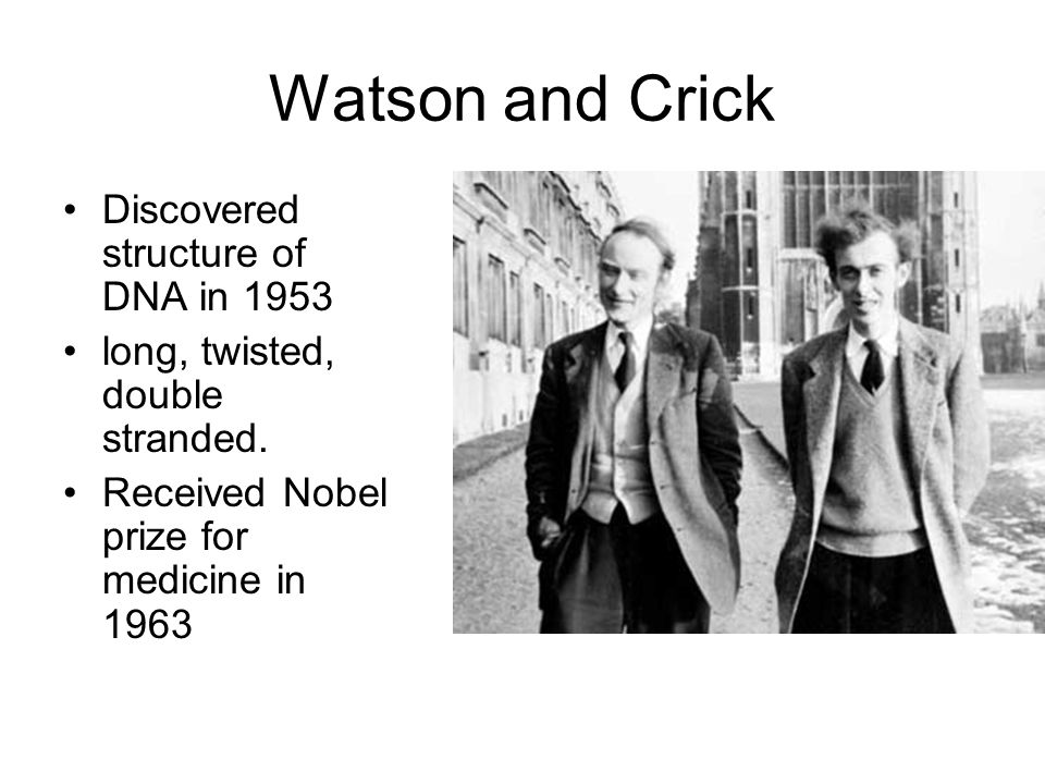 Watson and Crick Discovered structure of DNA in 1953 long, twisted, double stranded.