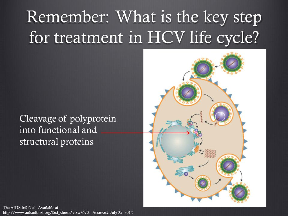 Remember: What is the key step for treatment in HCV life cycle? Cleavage of polyprotein into functional and structural proteins The AIDS InfoNet. Avai
