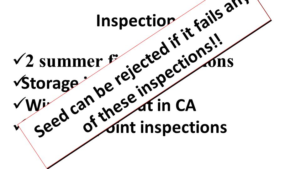 2 summer field inspections Storage inspections Winter grow-out in CA Shipping point inspections Inspections Seed can be rejected if it fails any of th