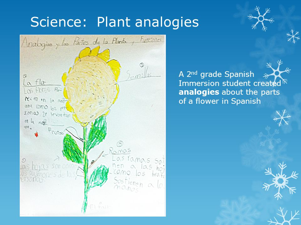 Science: Plant analogies A 2 nd grade Spanish Immersion student created analogies about the parts of a flower in Spanish