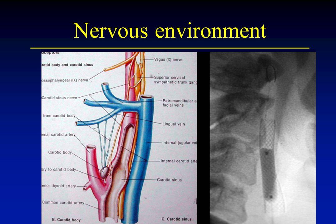 Nervous environment