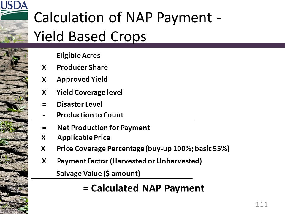 Calculation of NAP Payment - Yield Based Crops 111 Eligible Acres Approved Yield Yield Coverage level Disaster Level Production to Count Applicable Price X = X - X Producer Share X Net Production for Payment= Price Coverage Percentage (buy-up 100%; basic 55%)X Payment Factor (Harvested or Unharvested)X Salvage Value ($ amount)- = Calculated NAP Payment