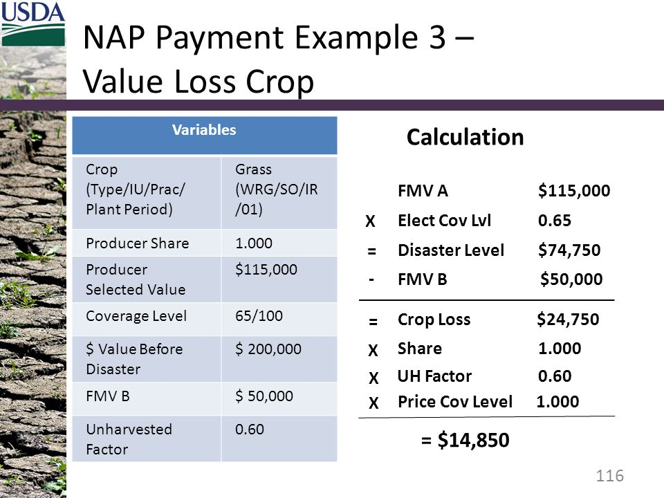 NAP Payment Example 3 – Value Loss Crop Variables Crop (Type/IU/Prac/ Plant Period) Grass (WRG/SO/IR /01) Producer Share1.000 Producer Selected Value