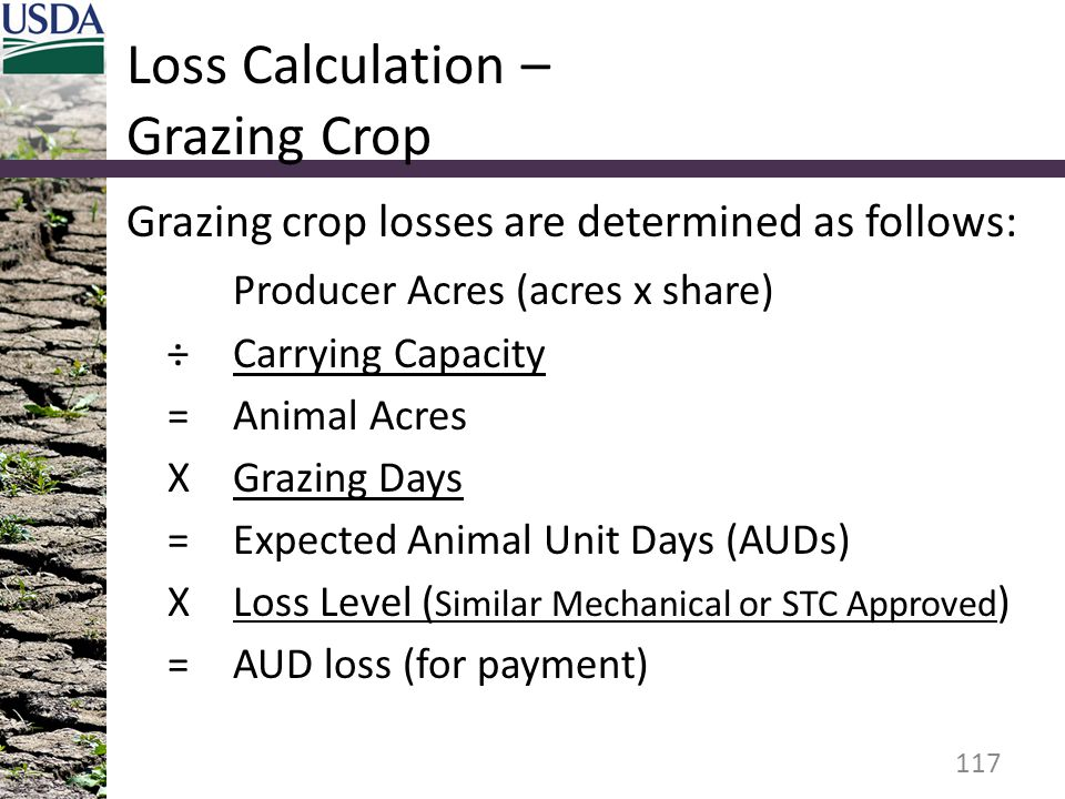 Loss Calculation – Grazing Crop Grazing crop losses are determined as follows: Producer Acres (acres x share) ÷Carrying Capacity =Animal Acres XGrazing Days =Expected Animal Unit Days (AUDs) XLoss Level ( Similar Mechanical or STC Approved ) =AUD loss (for payment) 117