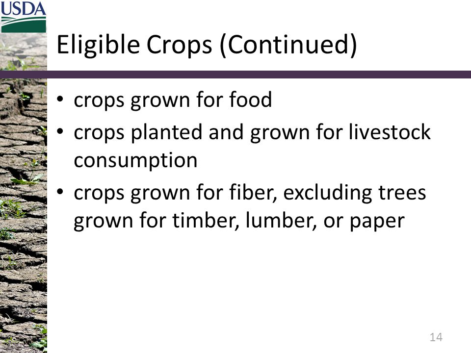 Eligible Crops (Continued) crops grown for food crops planted and grown for livestock consumption crops grown for fiber, excluding trees grown for timber, lumber, or paper 14