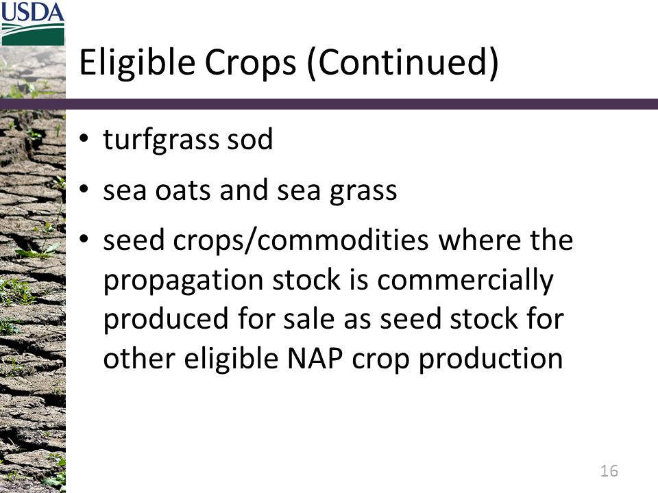 Eligible Crops (Continued) turfgrass sod sea oats and sea grass seed crops/commodities where the propagation stock is commercially produced for sale as seed stock for other eligible NAP crop production 16
