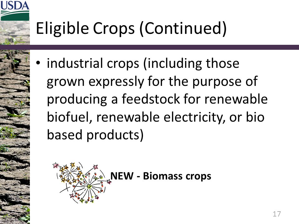 Eligible Crops (Continued) industrial crops (including those grown expressly for the purpose of producing a feedstock for renewable biofuel, renewable electricity, or bio based products) 17 NEW - Biomass crops