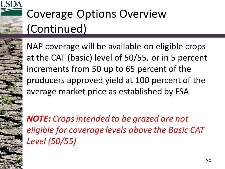 Coverage Options Overview (Continued) NAP coverage will be available on eligible crops at the CAT (basic) level of 50/55, or in 5 percent increments from 50 up to 65 percent of the producers approved yield at 100 percent of the average market price as established by FSA NOTE: Crops intended to be grazed are not eligible for coverage levels above the Basic CAT Level (50/55) 28