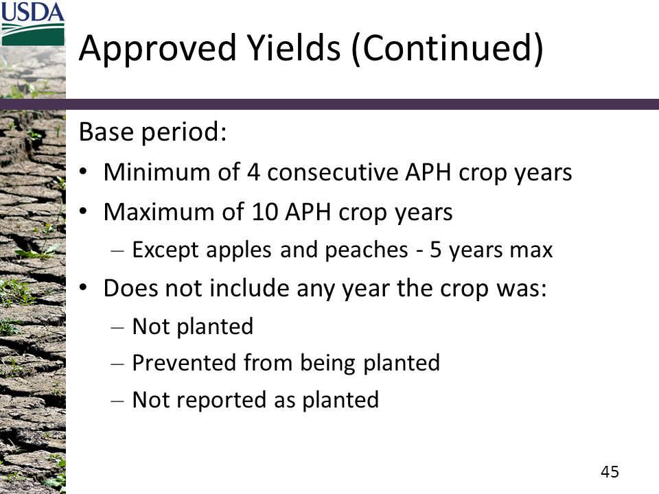Approved Yields (Continued) Base period: Minimum of 4 consecutive APH crop years Maximum of 10 APH crop years – Except apples and peaches - 5 years ma