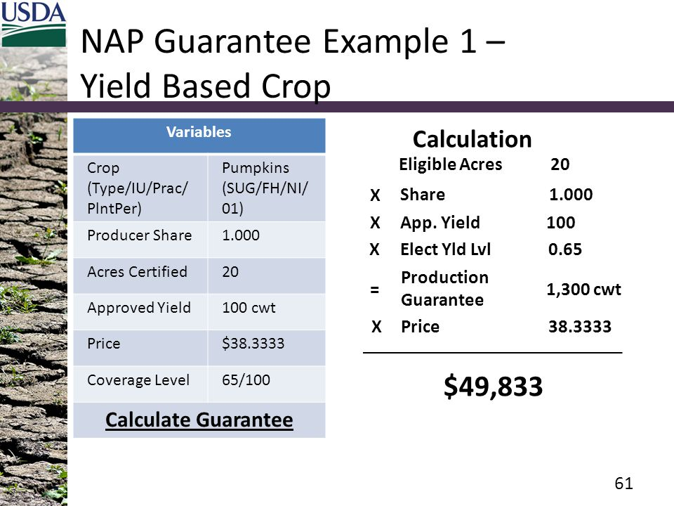 NAP Guarantee Example 1 – Yield Based Crop Variables Crop (Type/IU/Prac/ PlntPer) Pumpkins (SUG/FH/NI/ 01) Producer Share1.000 Acres Certified20 Appro