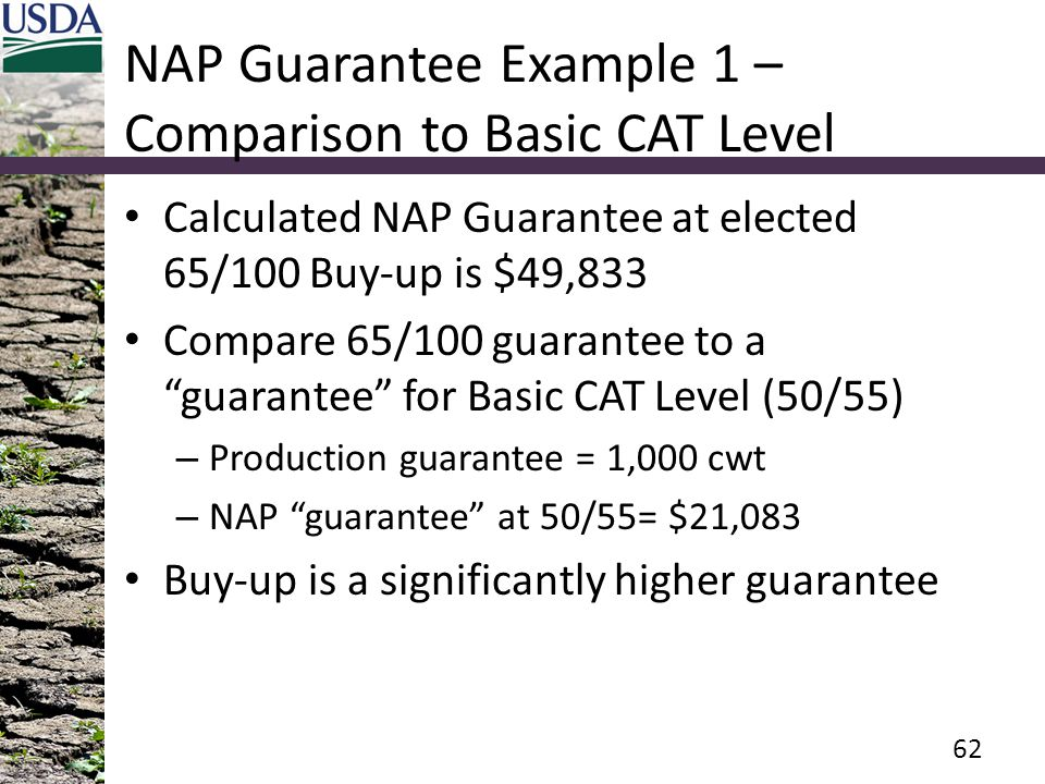 NAP Guarantee Example 1 – Comparison to Basic CAT Level Calculated NAP Guarantee at elected 65/100 Buy-up is $49,833 Compare 65/100 guarantee to a guarantee for Basic CAT Level (50/55) – Production guarantee = 1,000 cwt – NAP guarantee at 50/55= $21,083 Buy-up is a significantly higher guarantee 62