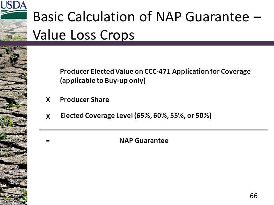 Basic Calculation of NAP Guarantee – Value Loss Crops 66 Producer Elected Value on CCC-471 Application for Coverage (applicable to Buy-up only) Elected Coverage Level (65%, 60%, 55%, or 50%) NAP Guarantee X = Producer Share X