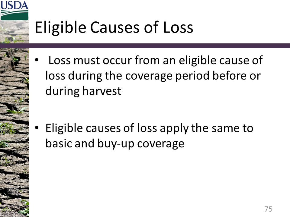 Eligible Causes of Loss Loss must occur from an eligible cause of loss during the coverage period before or during harvest Eligible causes of loss app