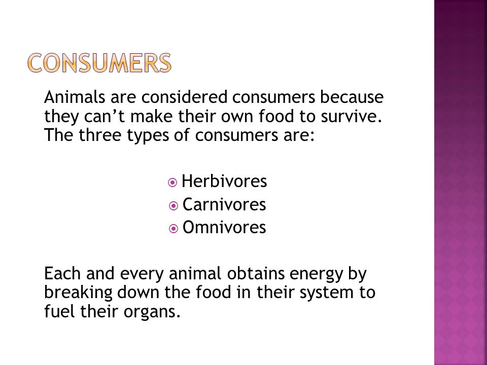 Animals are considered consumers because they can't make their own food to survive. The three types of consumers are:  Herbivores  Carnivores  Omni