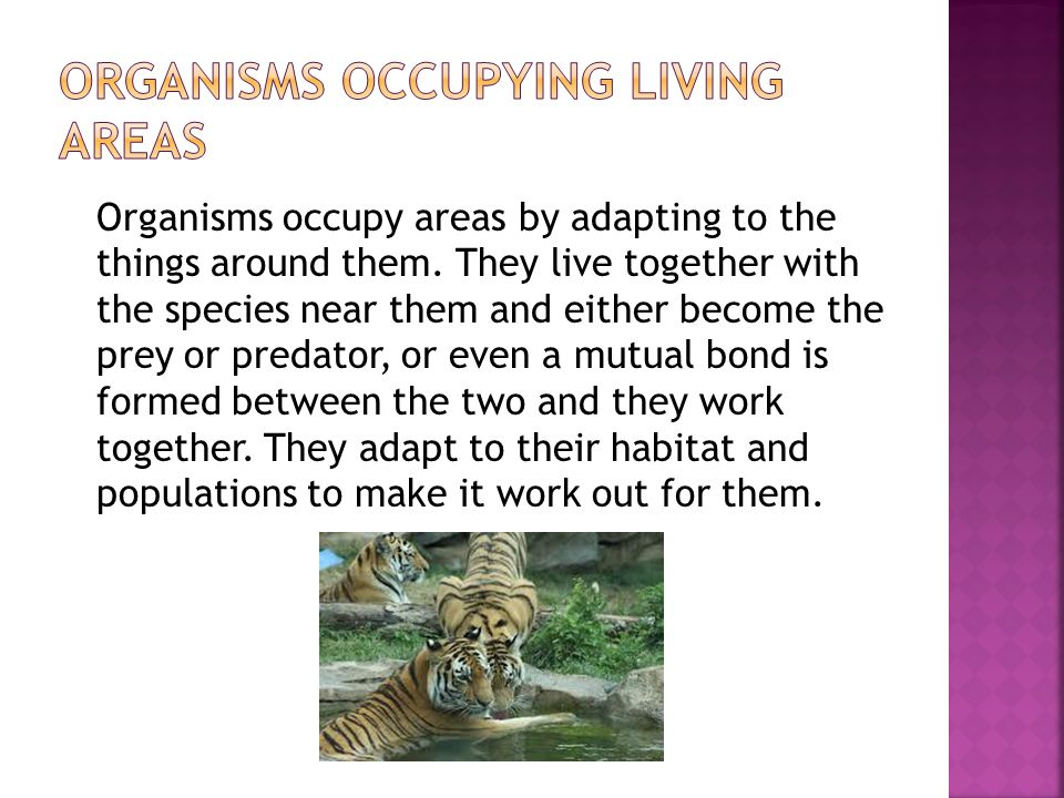 Organisms occupy areas by adapting to the things around them.