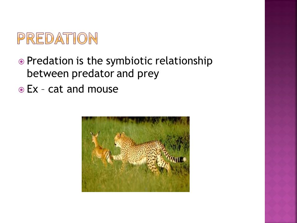  Predation is the symbiotic relationship between predator and prey  Ex – cat and mouse