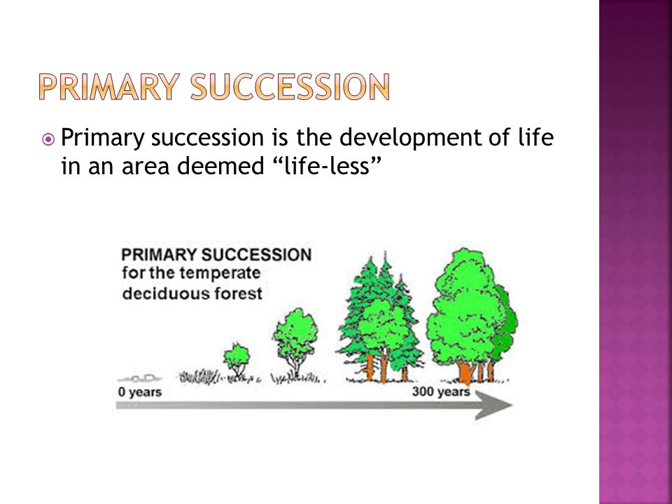 " Primary succession is the development of life in an area deemed ""life-less"""