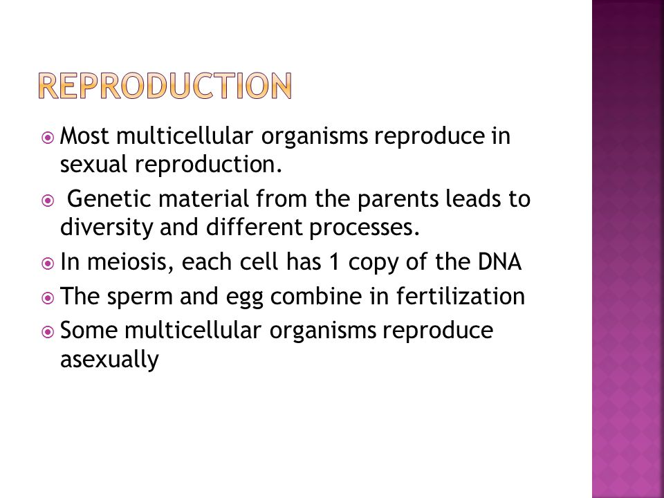  Most multicellular organisms reproduce in sexual reproduction.  Genetic material from the parents leads to diversity and different processes.  In