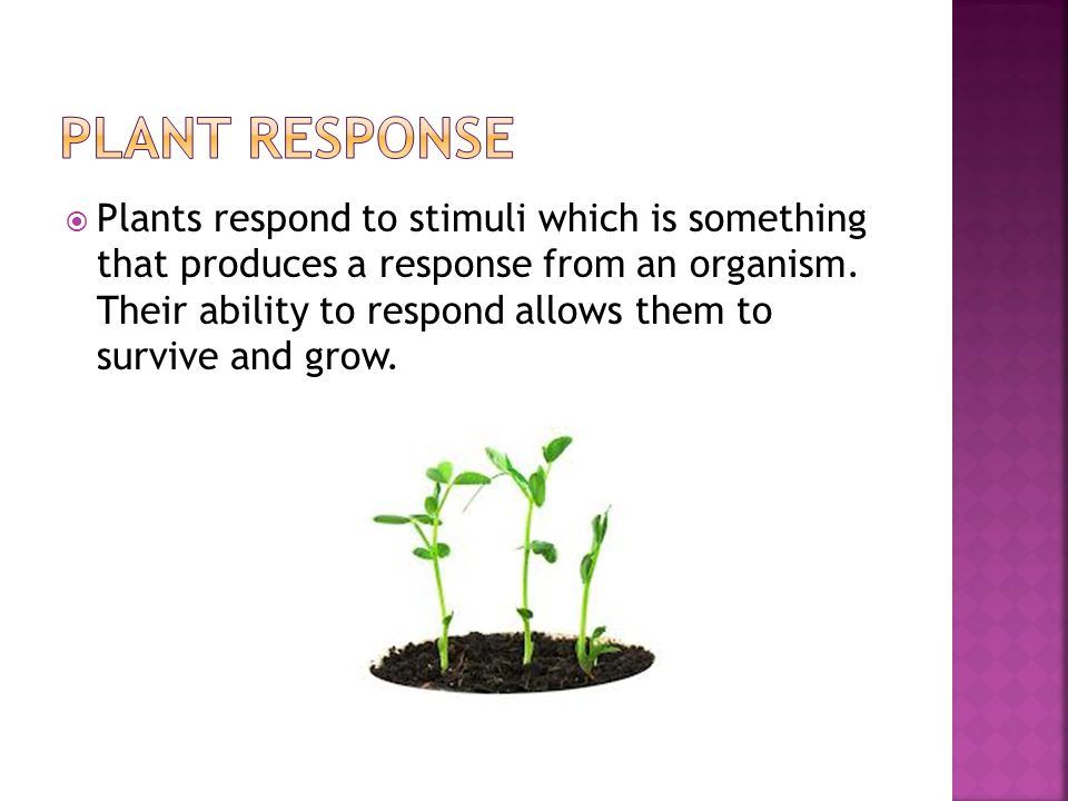  Plants respond to stimuli which is something that produces a response from an organism. Their ability to respond allows them to survive and grow.