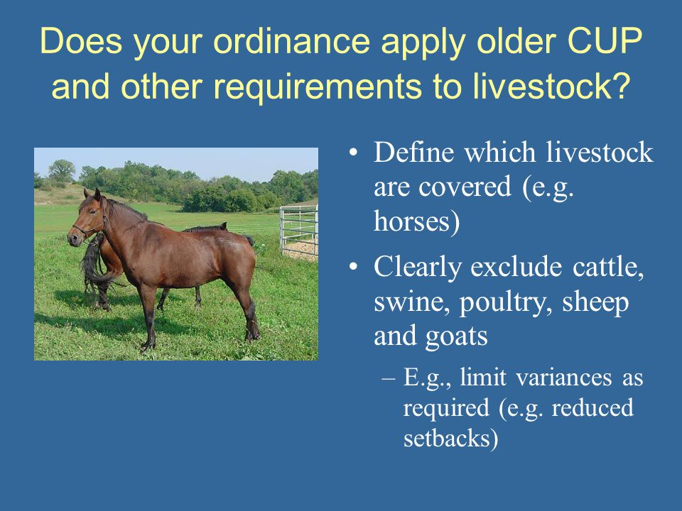 Does your ordinance apply older CUP and other requirements to livestock? Define which livestock are covered (e.g. horses) Clearly exclude cattle, swin